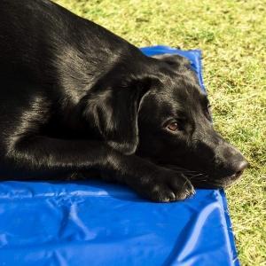 Il tappetino refrigerante per cani è un vero e proprio tappeto